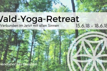 Verbunden im Jetzt mit allen Sinnen – Ein Yoga-Wald-Seminar mit Caroline & Suse